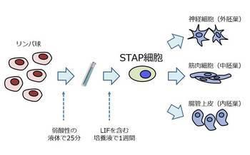 m_STAP.jpg
