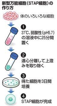 m_STAP2.jpg
